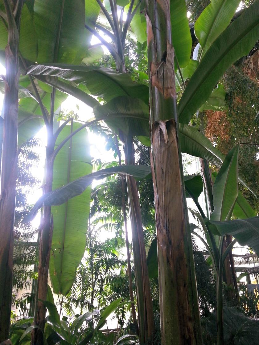 plantes 100
