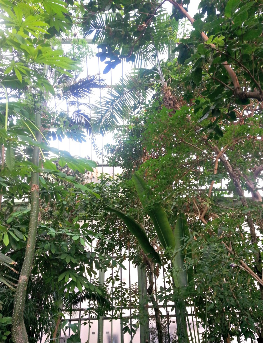 plantes 102