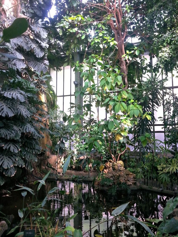 plantes 105