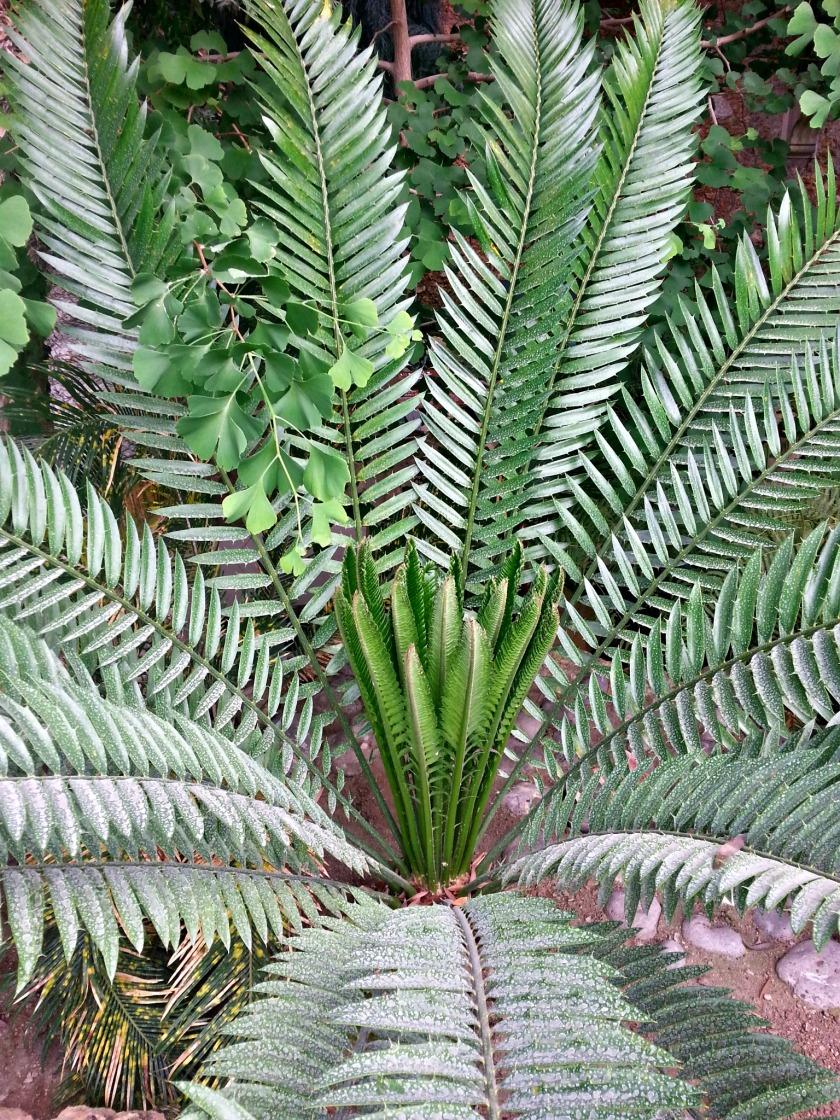 plantes 111