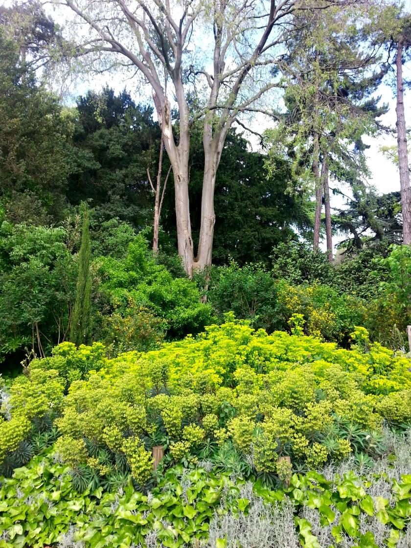 plantes 112