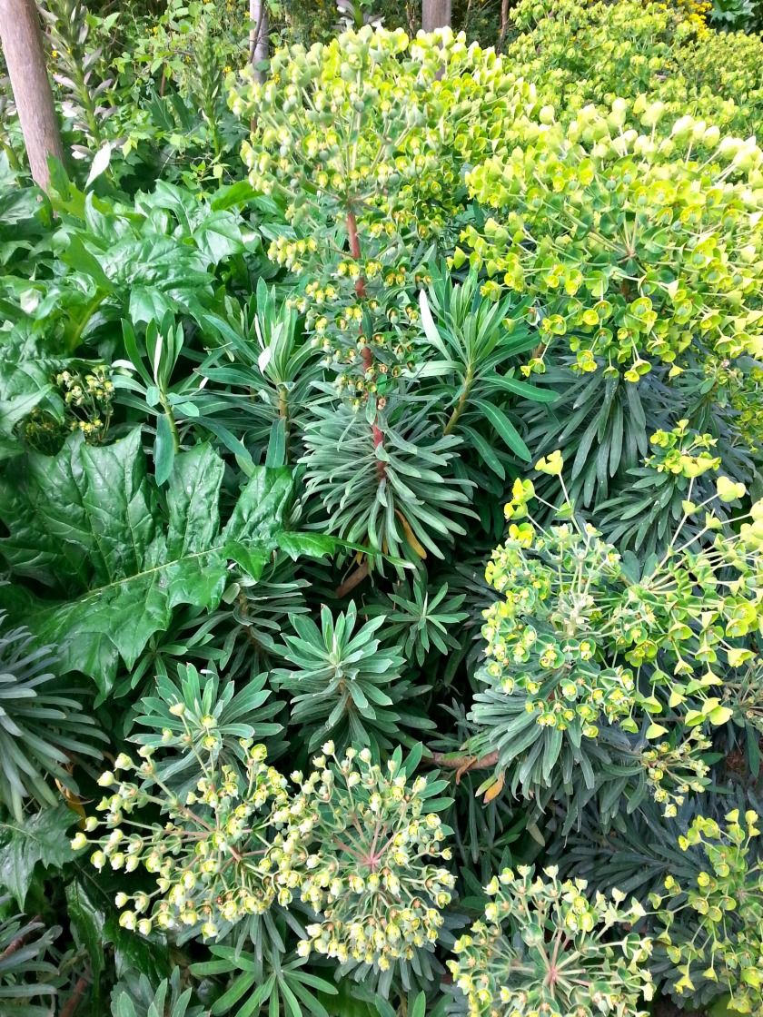 plantes 113