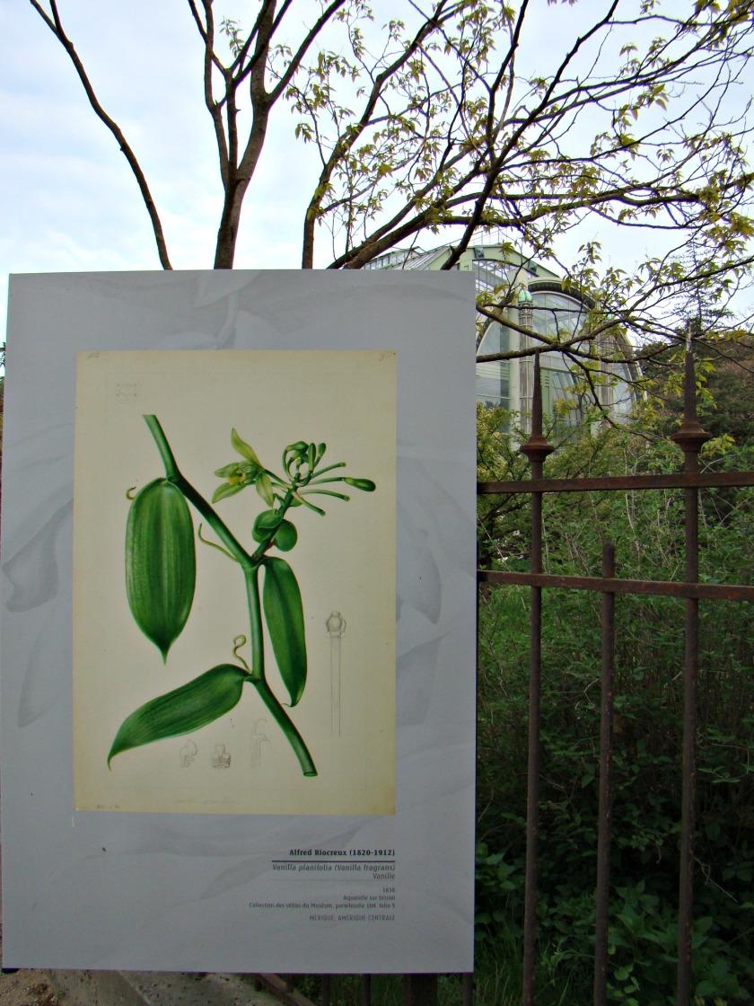 PLANTES 6