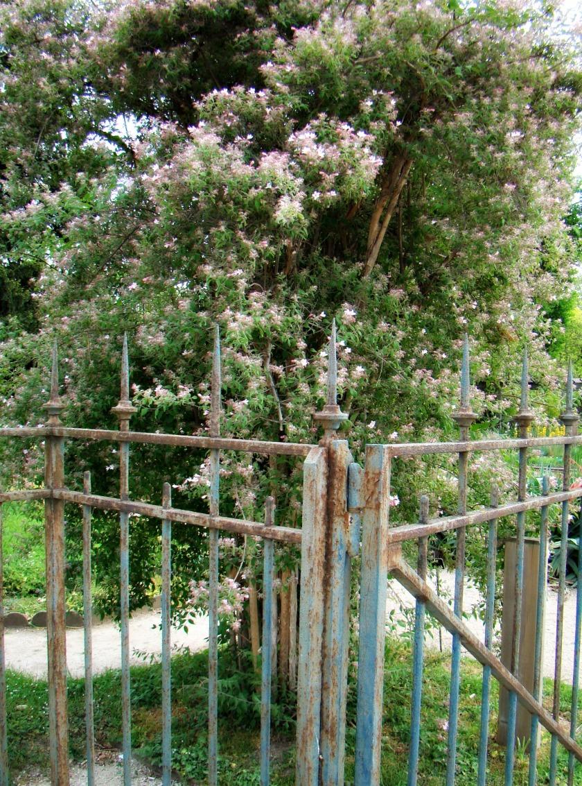 PLANTES TREE.jpg