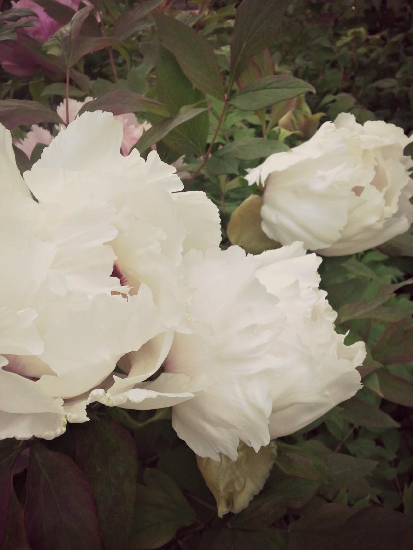 plantes-23