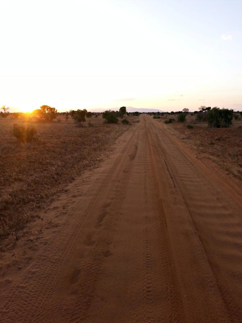 savanne-3